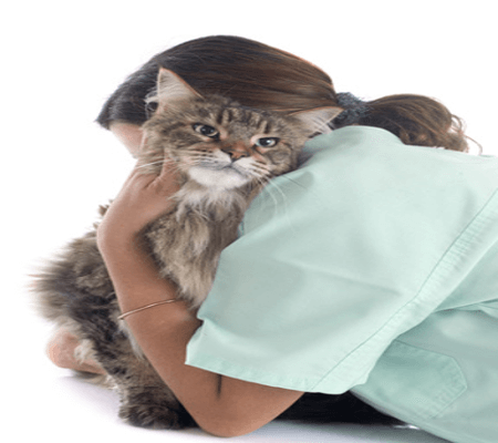 euthanasie chat